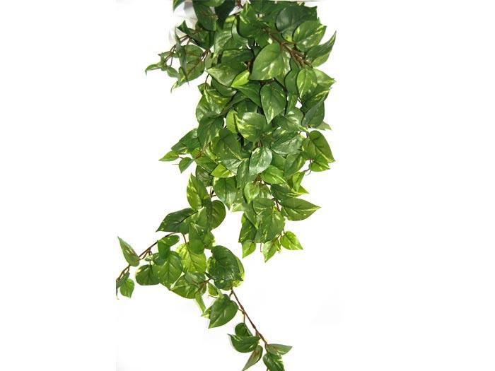 Piante verdi cascanti idea creativa della casa e dell - Piante verdi interno ...
