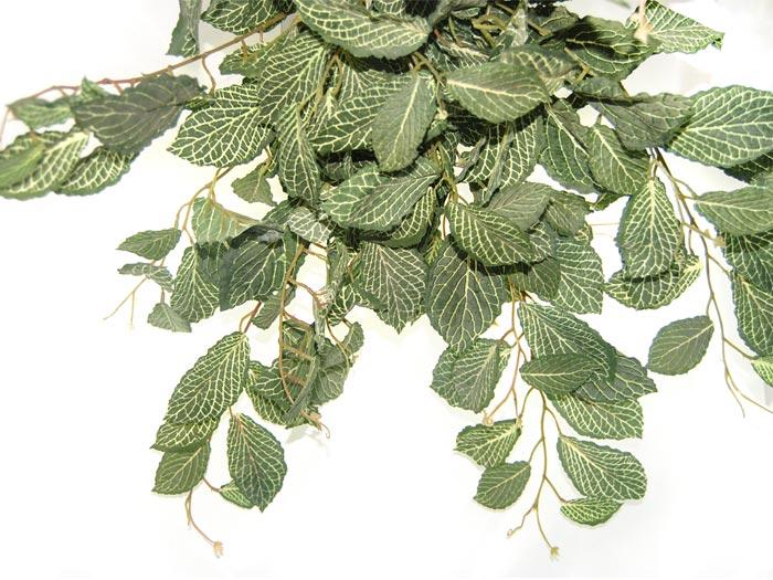 fiori cascanti crescita veloce: bouganvillea pianta rampicante che ... - Fiori Cascanti Crescita Veloce