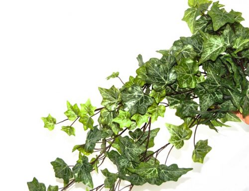 Hedera Real Touch