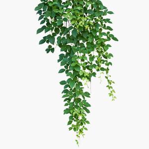 home fiorfiore vendita piante e fiori artificiali e