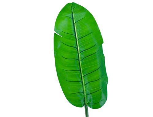 Leaf Banano