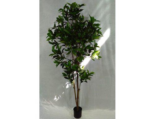 Shikiba Plant (h.150)