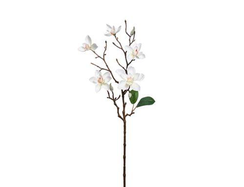 Tralcio magnolia