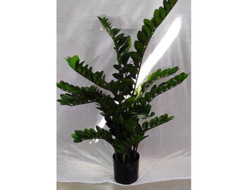 Zamifolia plant (h.130)