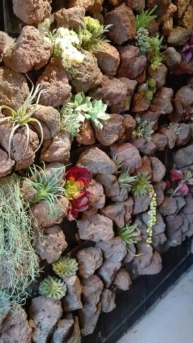 allestimenti-fiori-piante-artificiali-parete-sasso-piante-grasse