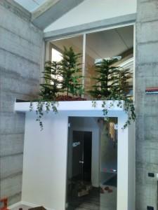 allestimenti-fiori-piante-artificiali palestra-1