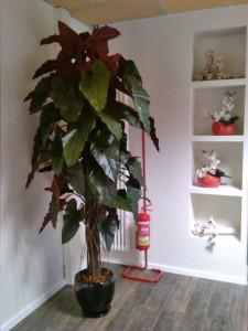allestimenti-fiori-piante-artificiali palestra-2