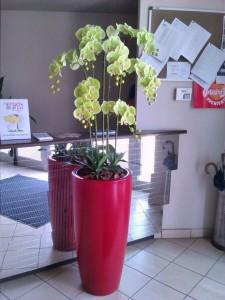 allestimenti-fiori-piante-artificiali palestra-5
